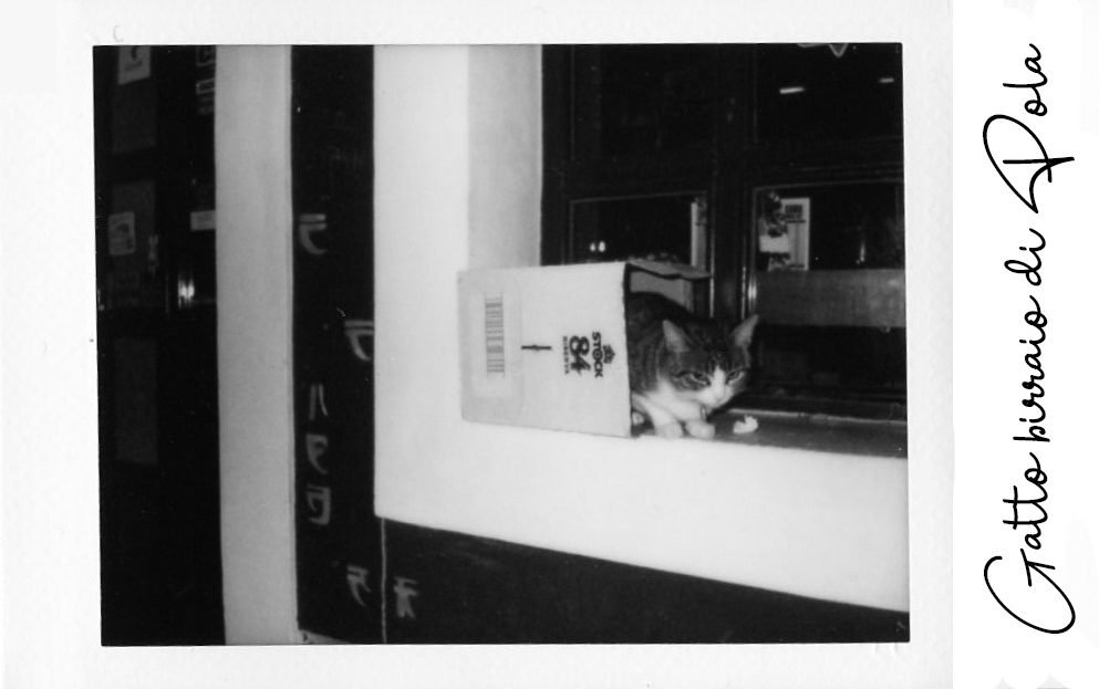 The Space Passenger Instax Gatto Pola